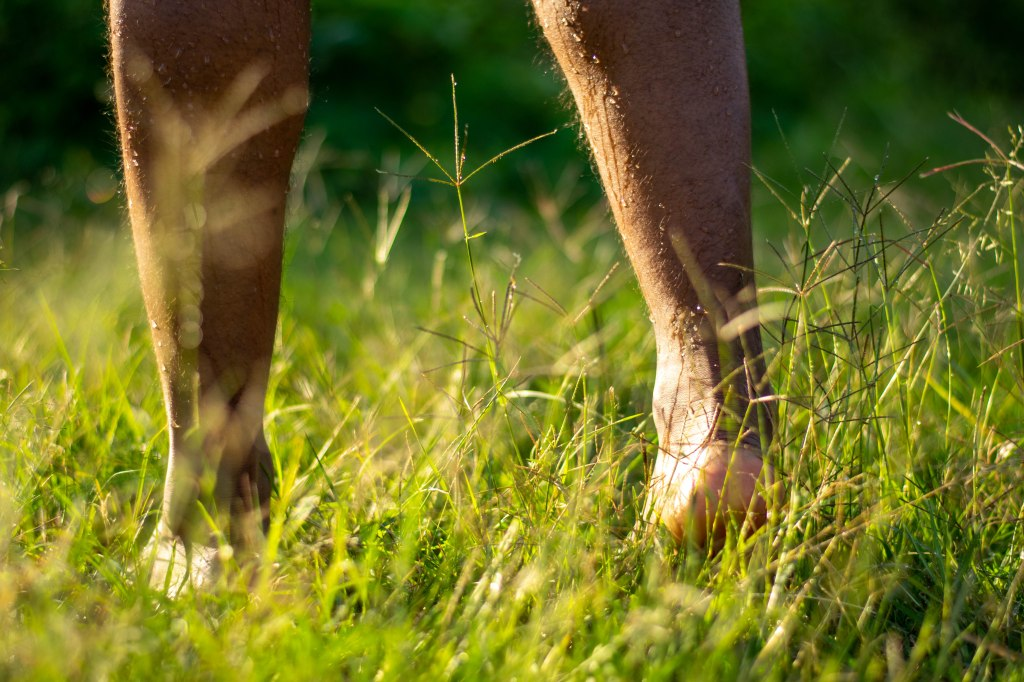 Hairy male feet on dewy grass. The right foot is raised as if in motion. Dew trickles down both calves towards his bare feet.